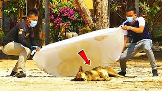 Best Dog Prank - Big Blanket vs Prank Sleeping Dog Super Funny - Must Watch Funny \u0026 Try Not To Laugh