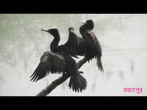 Rajasthan slide show