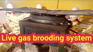 Low cost/management gas brooding system