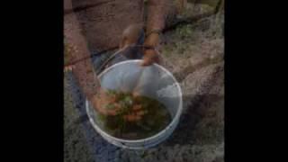 brujos de catemaco receta para la buena suerte y el amor parte 002
