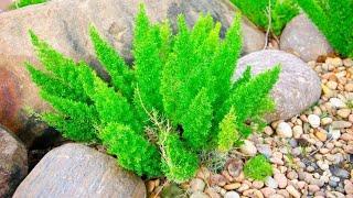 Essa planta vai dar vida a sua casa – Venha conhecer