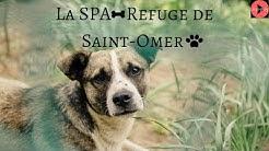 La SPA - Refuge de Saint-Omer