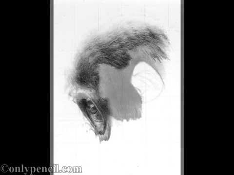 Baby Gorilla Pencil Drawing
