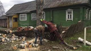 Решили спилить подгнившую березу рядом с домом, вызвали бригаду пильщиков