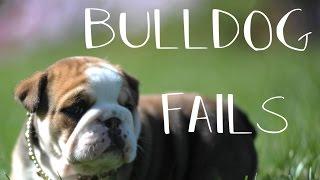 Bulldog fails 2018