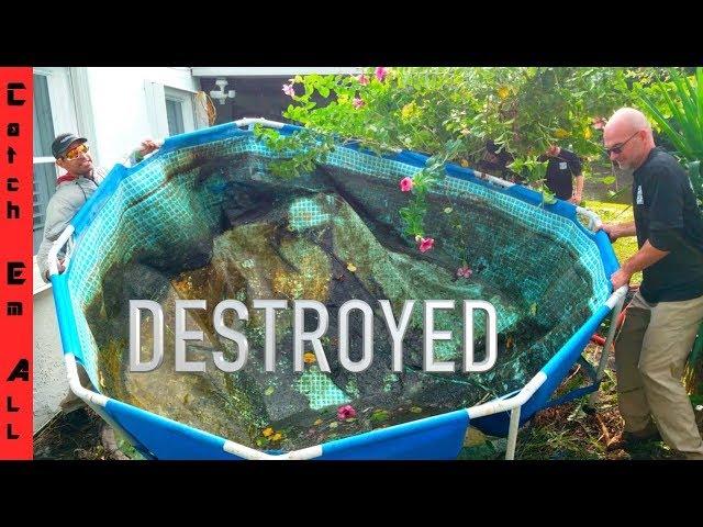 DESTROYED my FISH POOL POND!