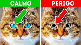 12 Sinais de que o Seu Animal de Estimação está Pedindo Ajuda thumbnail