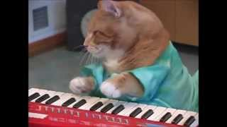 Ata Kak - Obaa Sima (Keyboard Cat Edition)