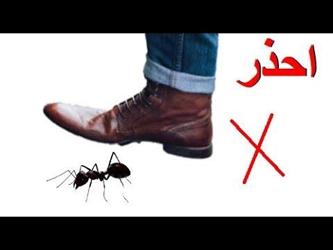 نهى رسول الله صلى الله عليه وسلم عن قتل أربع من الدواب