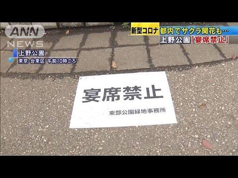 さくらは満開だが宴会が出来ない上野公園!