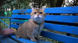 Hosico Cat on a walk
