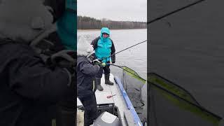 Трофеи Санкт Петербурга рыбалка в Питере 79118283779