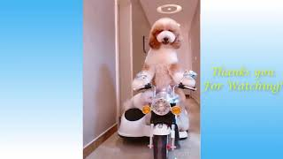 Cute Animals And Funny Pets Compilation #3   CatComp