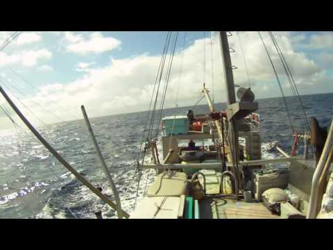 Commercial Albacore Tuna fishing 2016