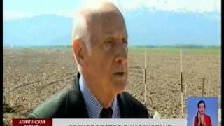 В Казахстане появятся ореховые сады на площади в 5 тысяч гектаров