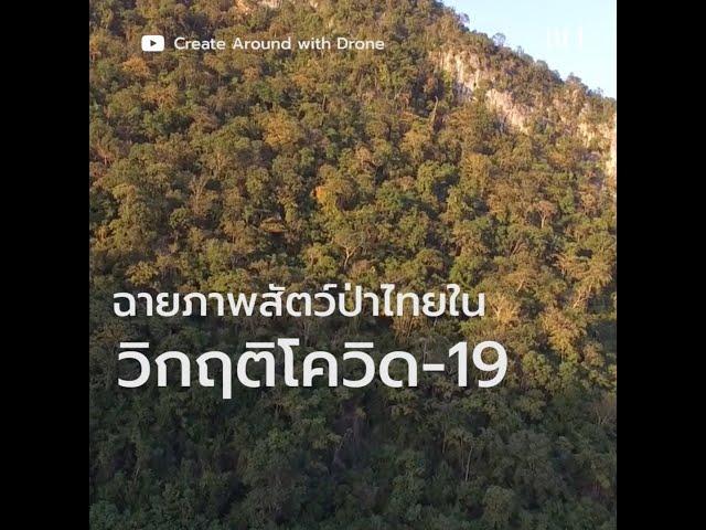 ฉายภาพสัตว์ป่าไทยในวิกฤติโควิด-19
