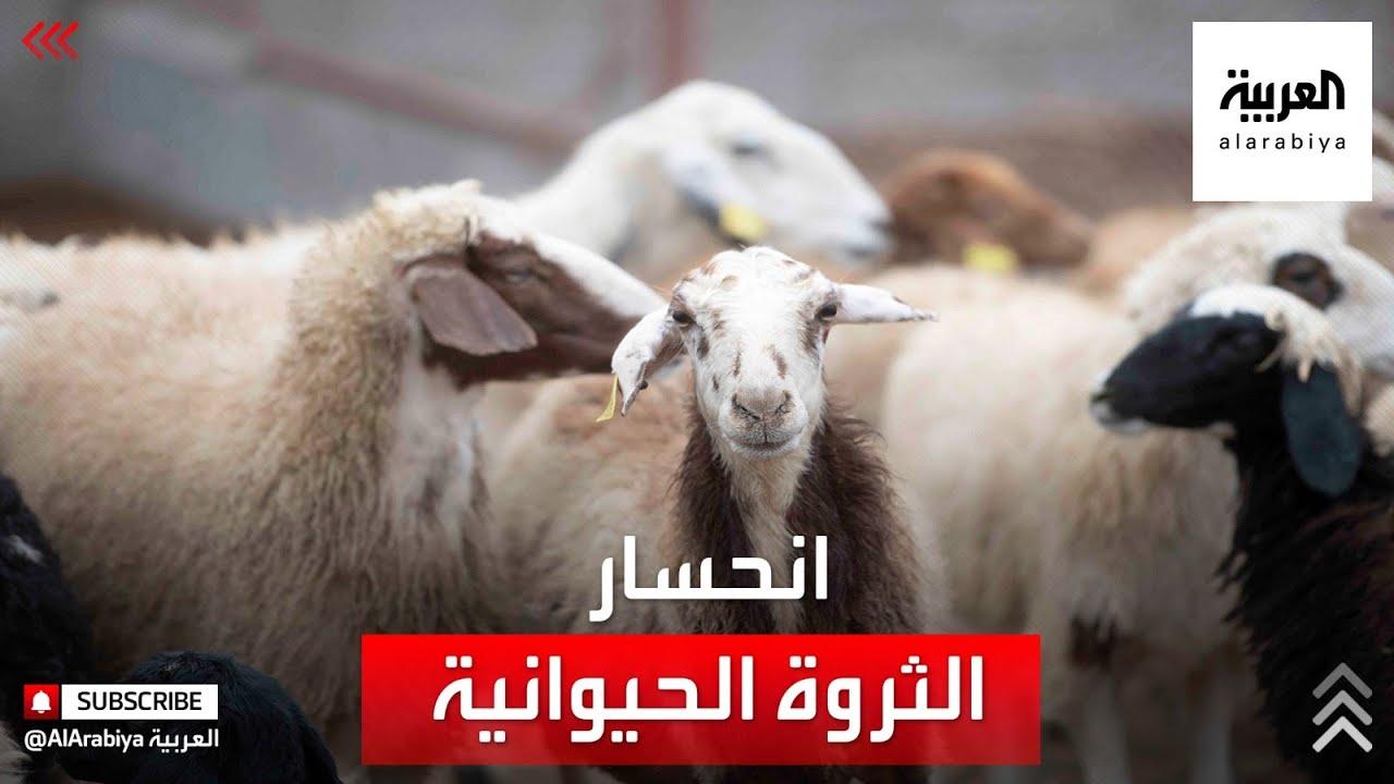 سوريا تخسر 45 في المئة من ثروتِها الحيوانية خلال 10 سنوات  - نشر قبل 38 دقيقة