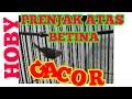 Prenjak Atas Betina Gacor  Mp3 - Mp4 Download