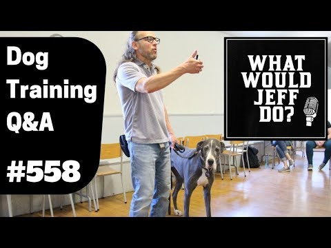 dog-training---dog-growling---stop-dog-play-biting---what-would-jeff-do?-q&a-ep.558-(2019)