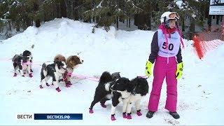 Лучших ездовых собак и их работу в упряжках могли увидеть жители и гости Тотьмы