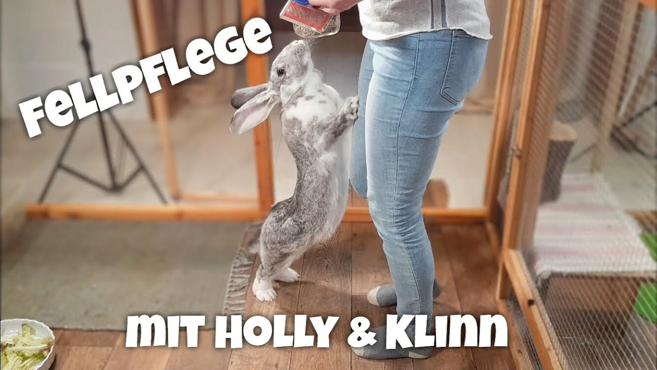 Für 8€ XXL Kaninchengehege selber bauen by Die Hasenbande