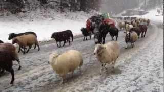 Le moutonnier