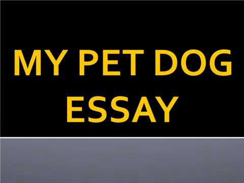 Видео Essays about dogs