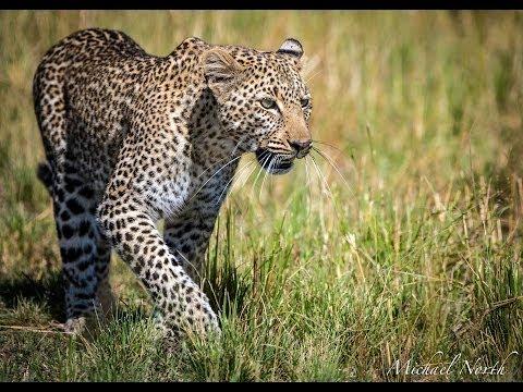 Africa Wildlife Photography Workshops & Photo Safaris