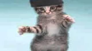 Кошки танцуют|||Танцуют все!)
