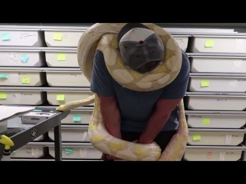 19ft Python Snake Chokes Man Around The Neck! | BRIAN BARCZYK