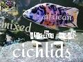 Updates |changes | identification | african|cichlids