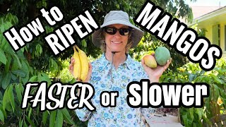 HOW TO Ripen Mangos! Speed it Up or Slow it Down