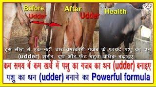 पशु का थन (udder) बनाने का पावरफुल फार्मूला, Powerful formula for making udder,
