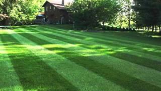 Diamond cut landscaping & Lawn care