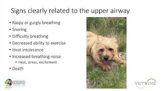 Norwich Terrier Upper Airway Syndrome  Clinical Signs and Findings