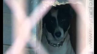 В период морозов в Курске спасают бездомных собак