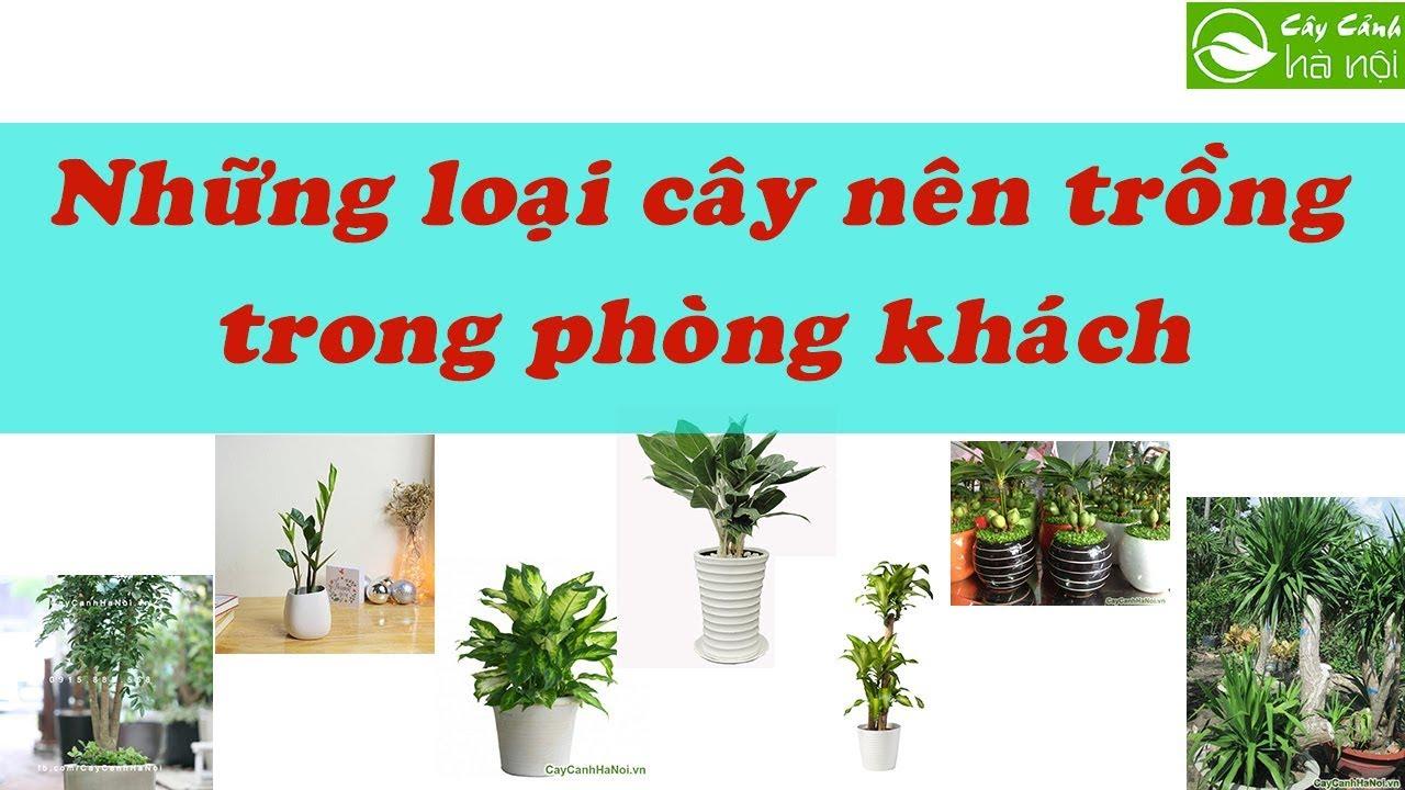 Những loại cây cảnh nên trồng trong phòng khách