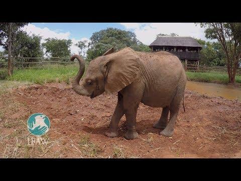 Njanji The Elephant Loves Elvis