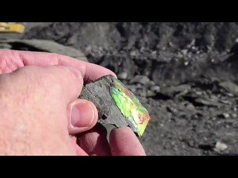 Watch How Ammolite, The Rarest Of Gemstones, Is Mined In Alberta