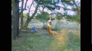 New York Pit Bull Terrier
