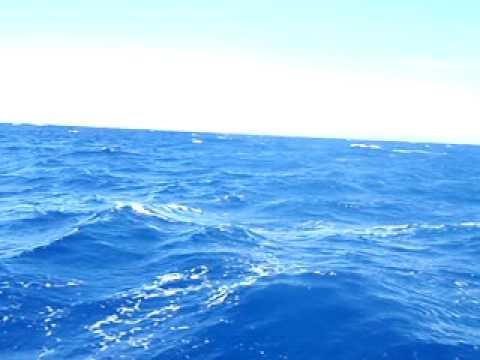 Fishing dorado (Mahi Mahi) @ La Parguera, Puerto R...