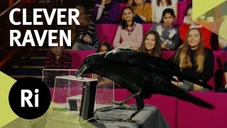 Brann the Clever Raven - 2017 CHRISTMAS LECTURES