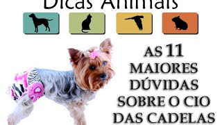 AS 11 MAIORES DÚVIDAS SOBRE O CIO DAS CADELAS
