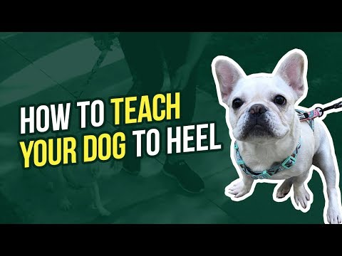 how-to-teach-your-dog-to-heel