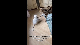 #cats#playing