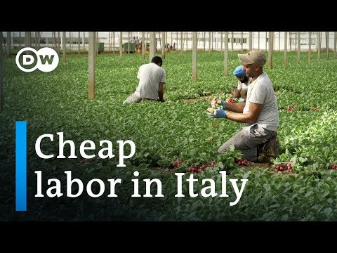 Clandestine employment of Indians in Italy | DW Documentary (Migrant documentary)