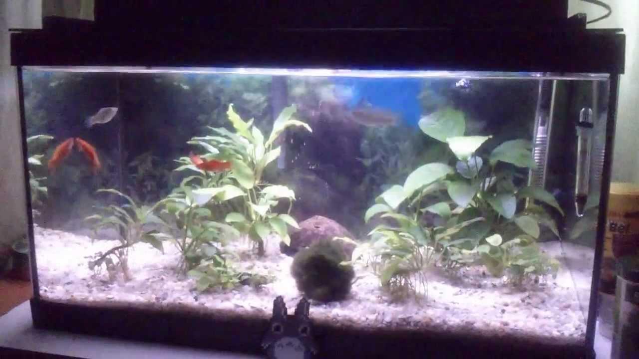 Pelea de peces acuarios tropicales diario de un acuario for Comida para peces tropicales acuario