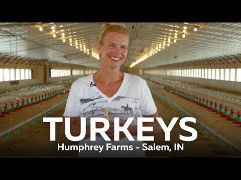 Indiana Turkeys - Humphrey Farms, Salem, IN