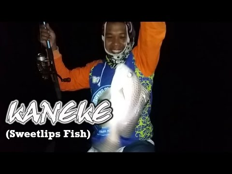 giant trevally hook up