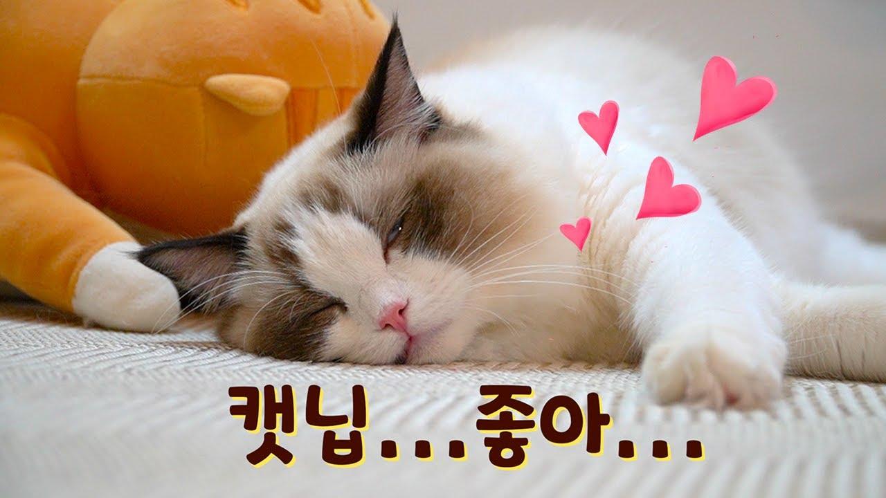 냥생 처음 캣닙을 맛본 고양이들의 반응